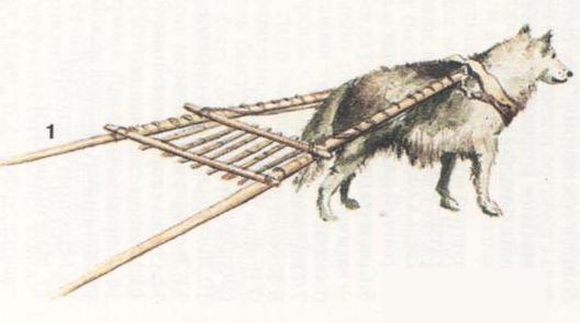 ездовая собака, запряжённая в волокушу