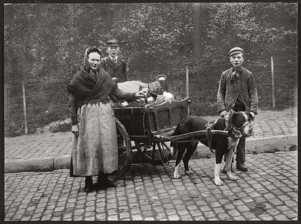 старое фото,собака с тележкой