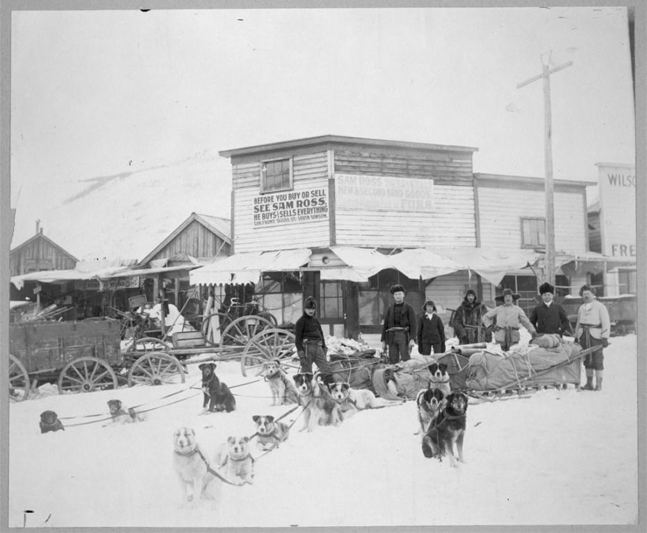 ездовые собаки на Аляске, конец XIX - начало XX вв.