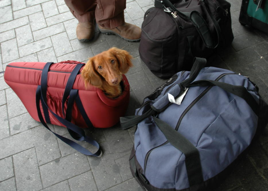 собака в переноске,багаж