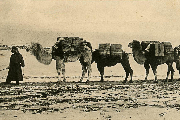 старинное фото караван верблюдов