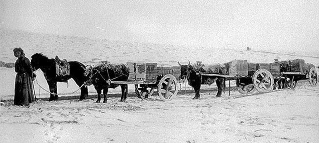 старинное фото караван мулов с повозками