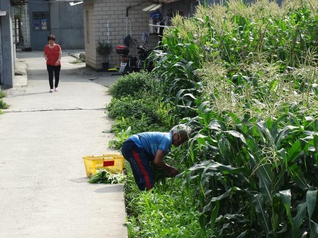 Шанхай огород в городе