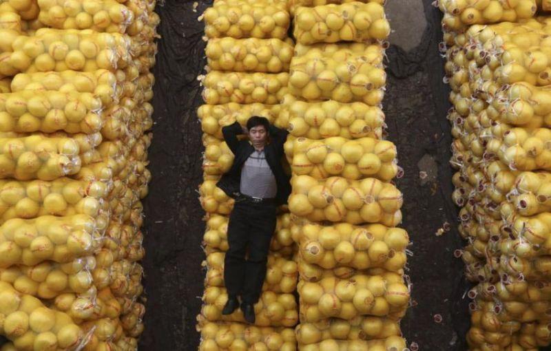 Дневной сон Китай спит на мешках с лимонами