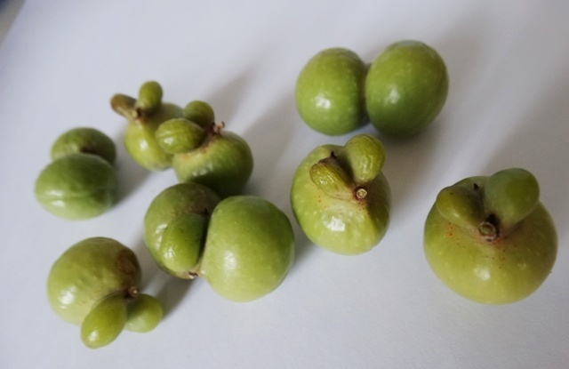 китайский плод