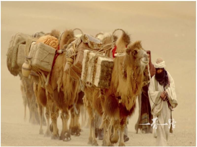 верблюды погонщик