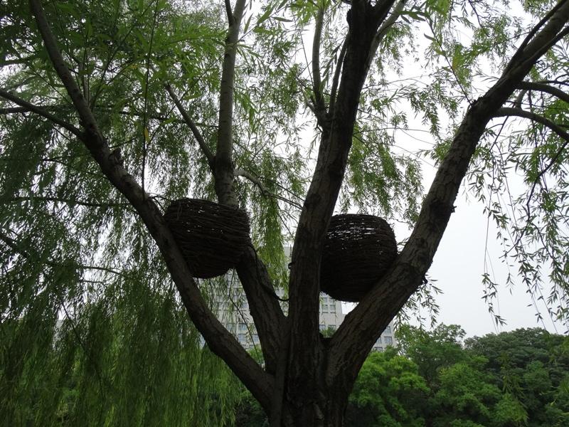 гнёзда на дереве