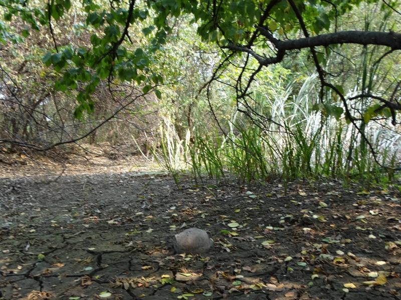 пейзаж сосуд дерево