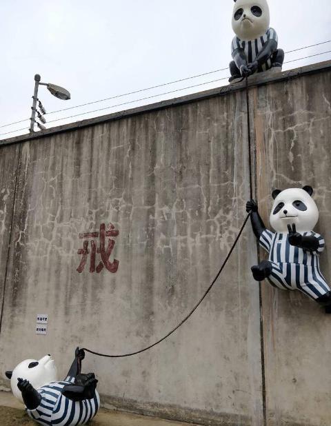 панды-зэки бывшая тюрьма Хэфэй Китай