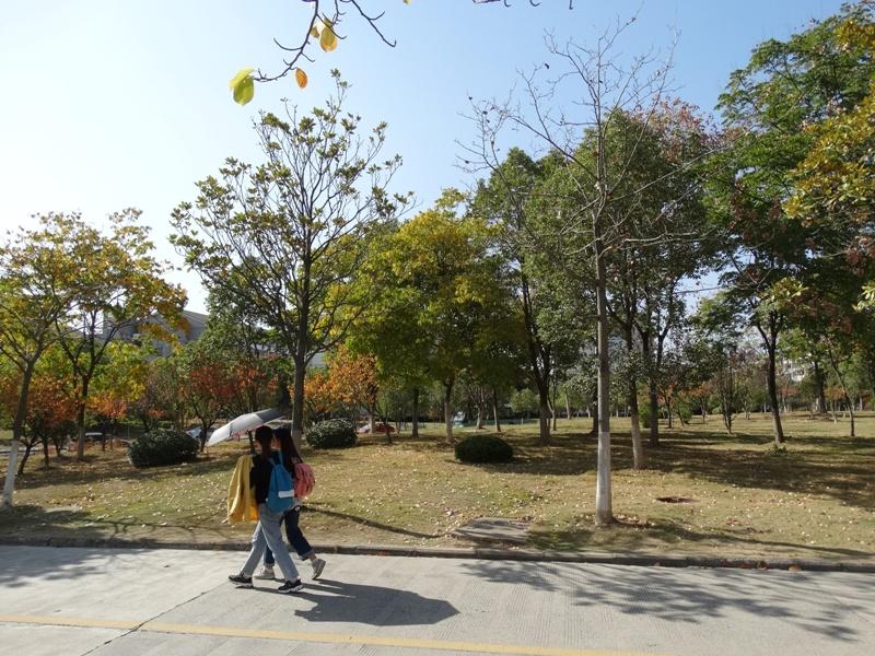 осень девушки по зонтиками от солнца