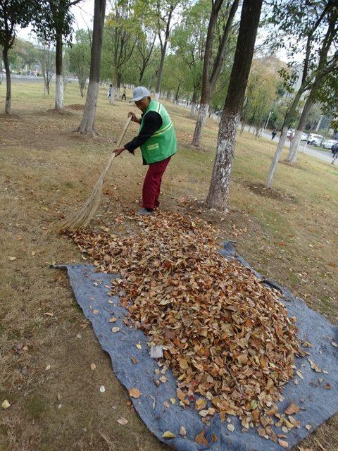 золотая осень опавшие листья