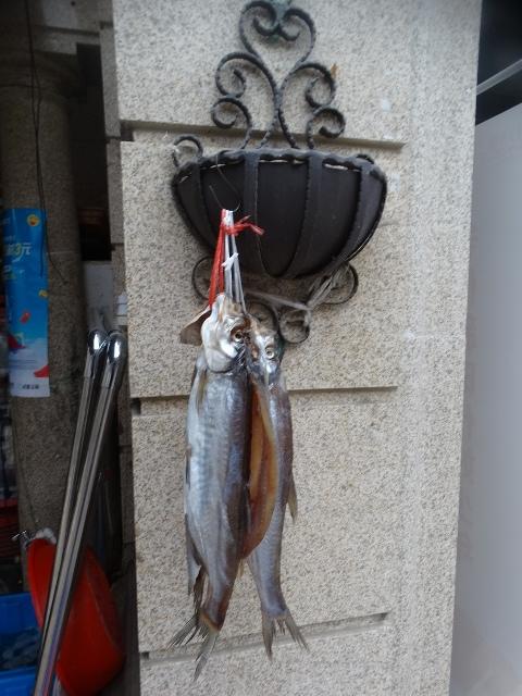 Новый год, Китай, две рыбы, Рождество