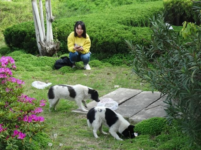 собачки,девушка-китаянка