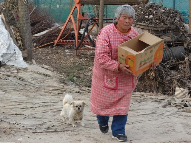 пожилая китаянка,собачка