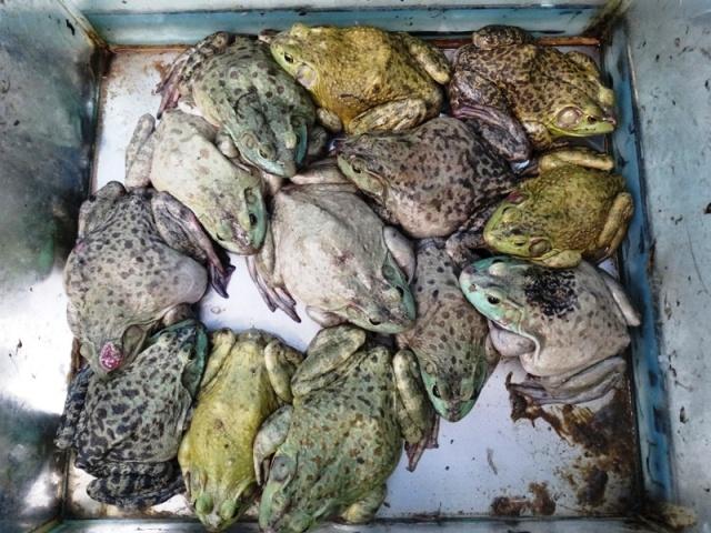 китайский рынок,лягушки