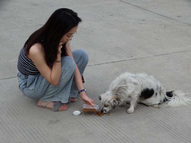 собака девушка,Китай